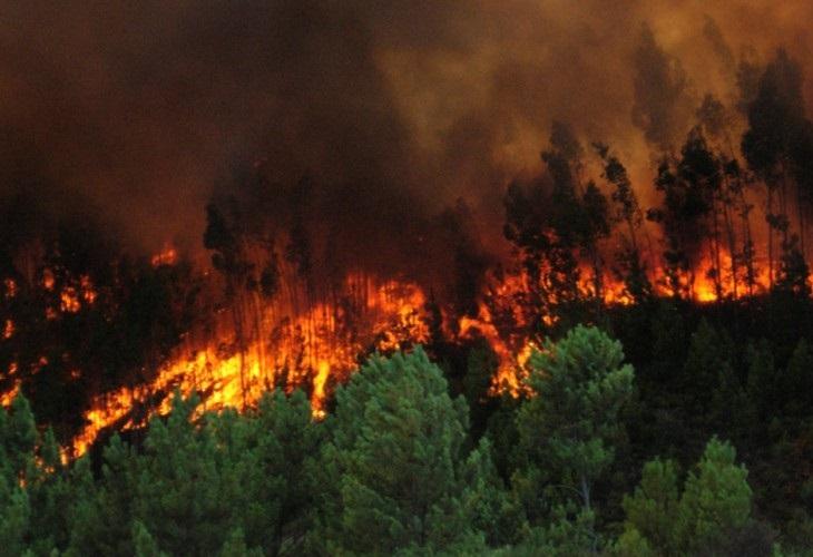 """FOTOS: Se incendia el Amazonas, el """"pulmón del mundo"""""""